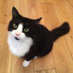 Joey cat floor